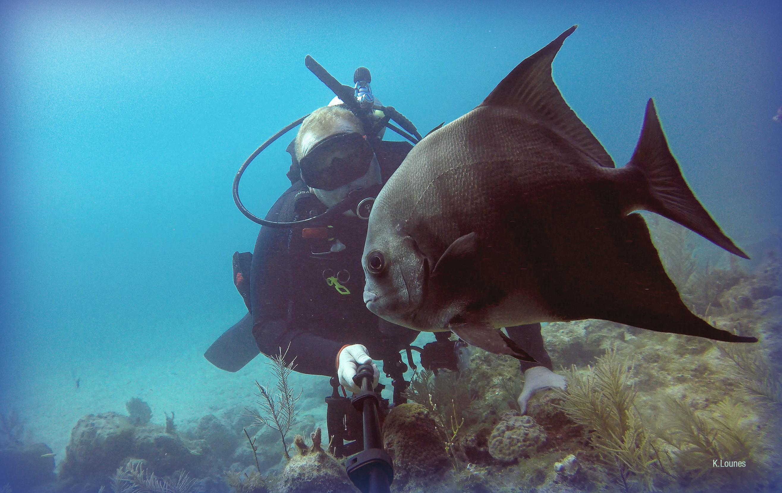 Zebra Fish Selfie