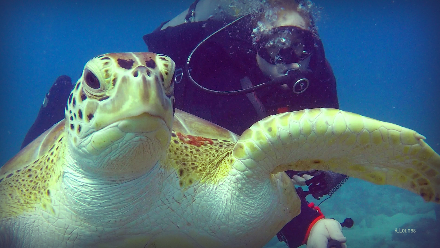 Green Turtle Encounter